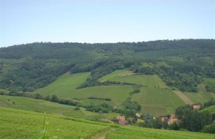 Schieferkopf Alsace